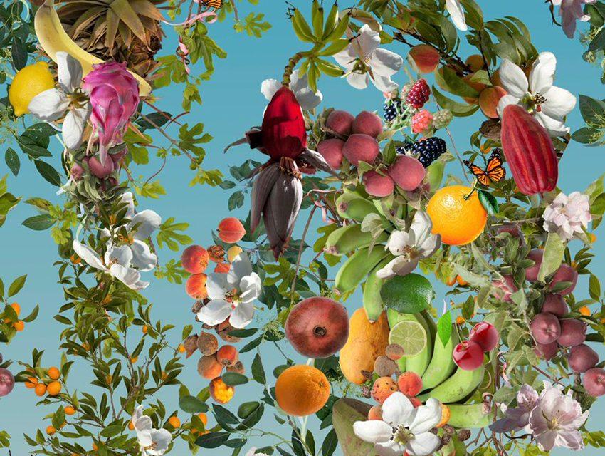 David Burns & Austin Young – 'Fallen Fruit'