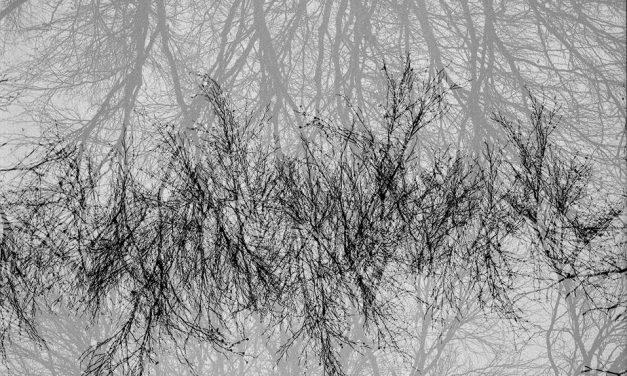 Mørkerommet fotokollektiv – FASE