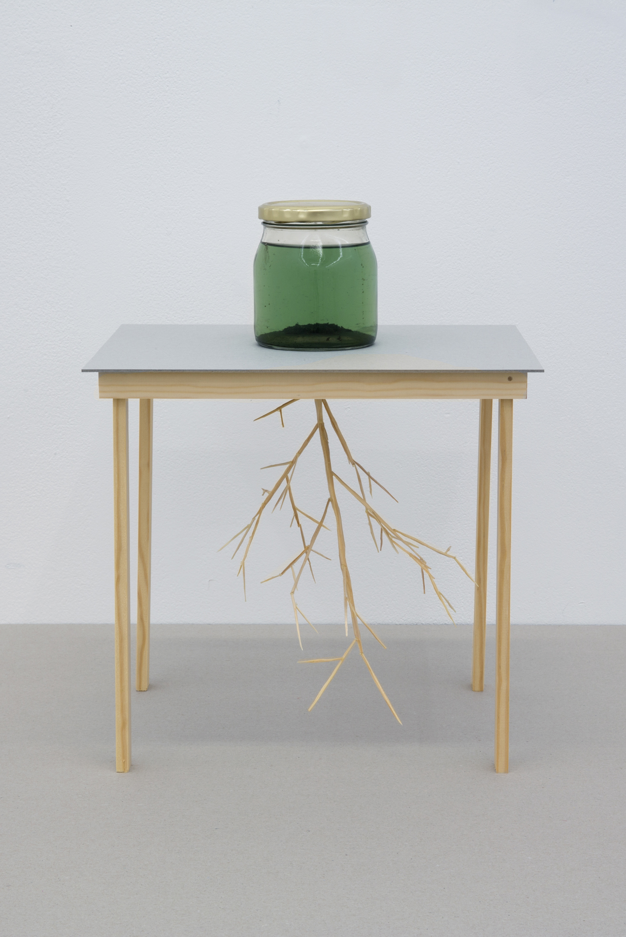 Sarah Jost – from an arboreal point of view